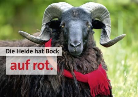 Heide Hat Bock Auf Rot I
