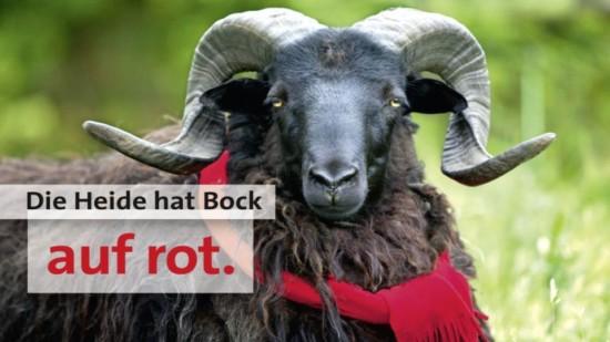 Heide hat bock
